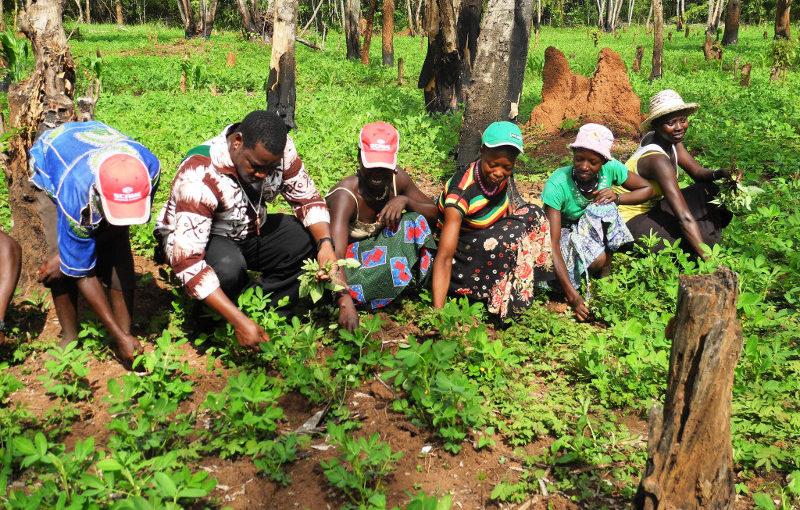 Agricoltura a Mupoi